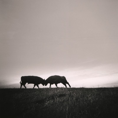Two Bulls, California