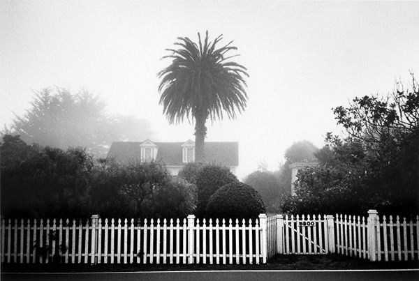 Palm, in the town of Elk, California, Mendocino County